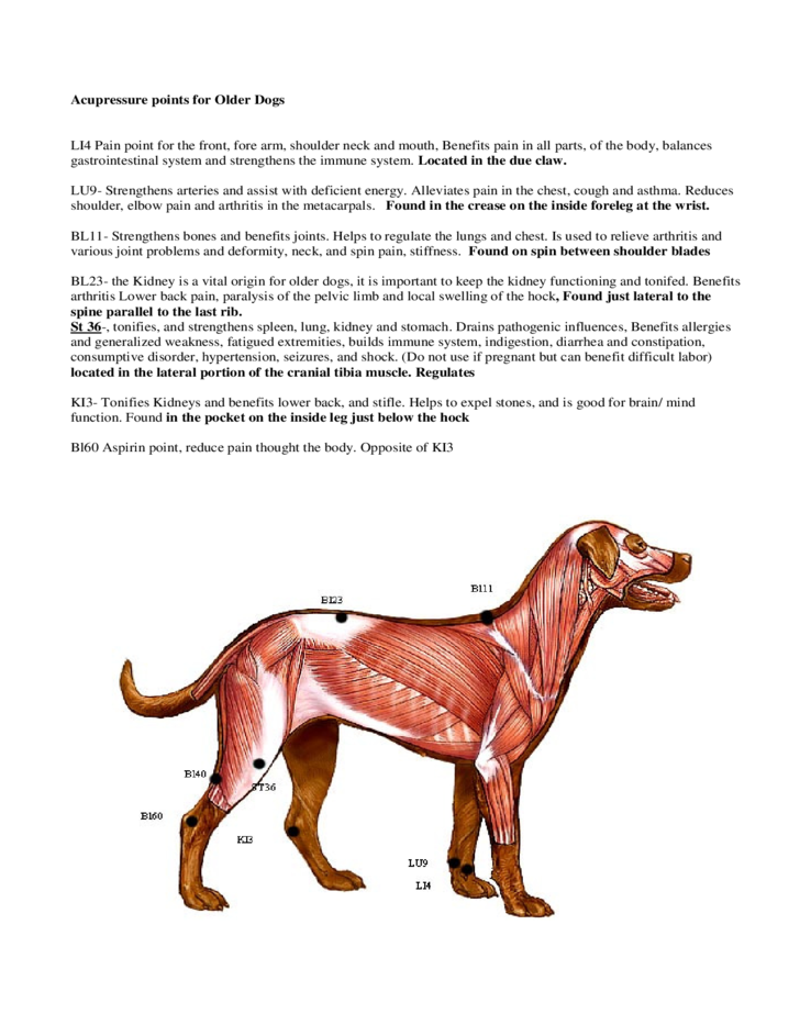 Acupressure Points Chart for Older Dogs Free Download