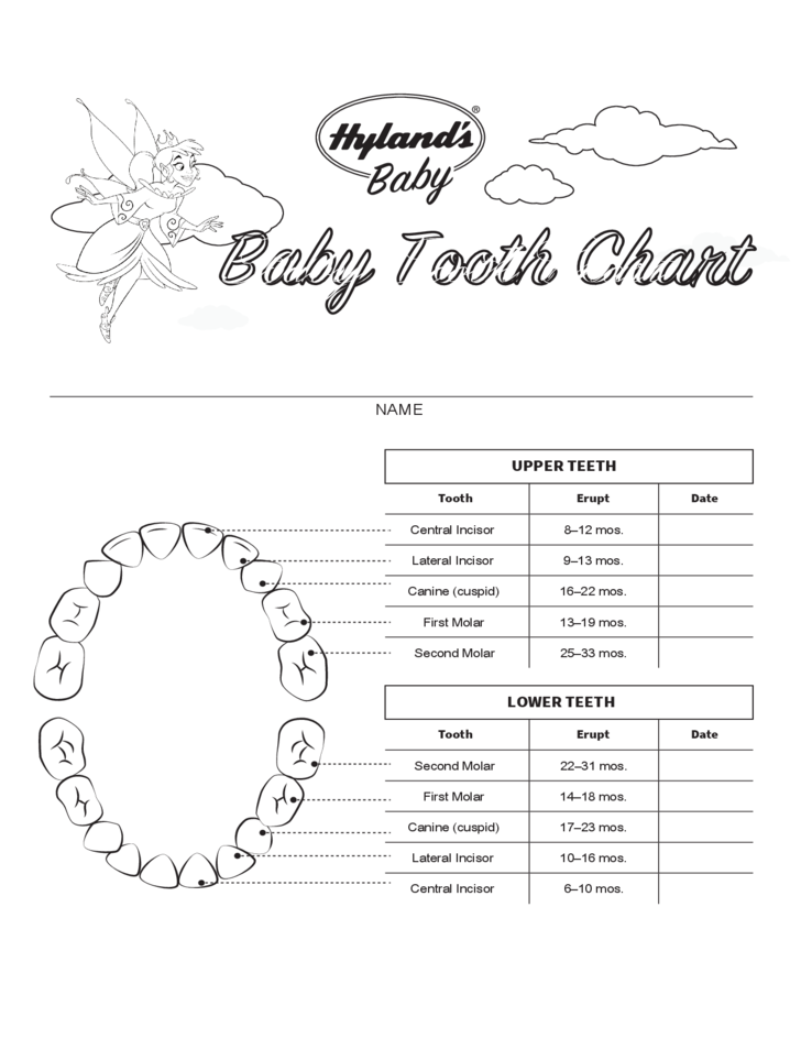 Baby Tooth Chart Template Free Download – Teeth Chart Template