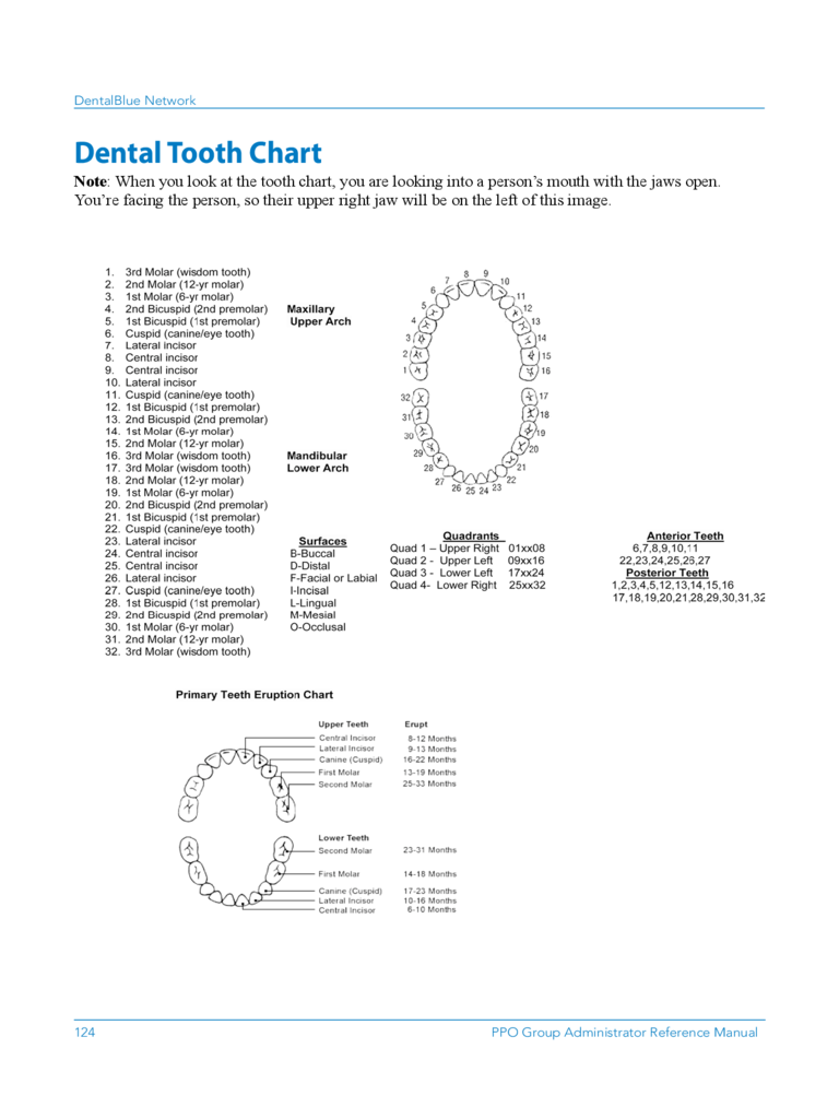 Dental Tooth Chart