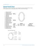 Dental Tooth Chart Free Download