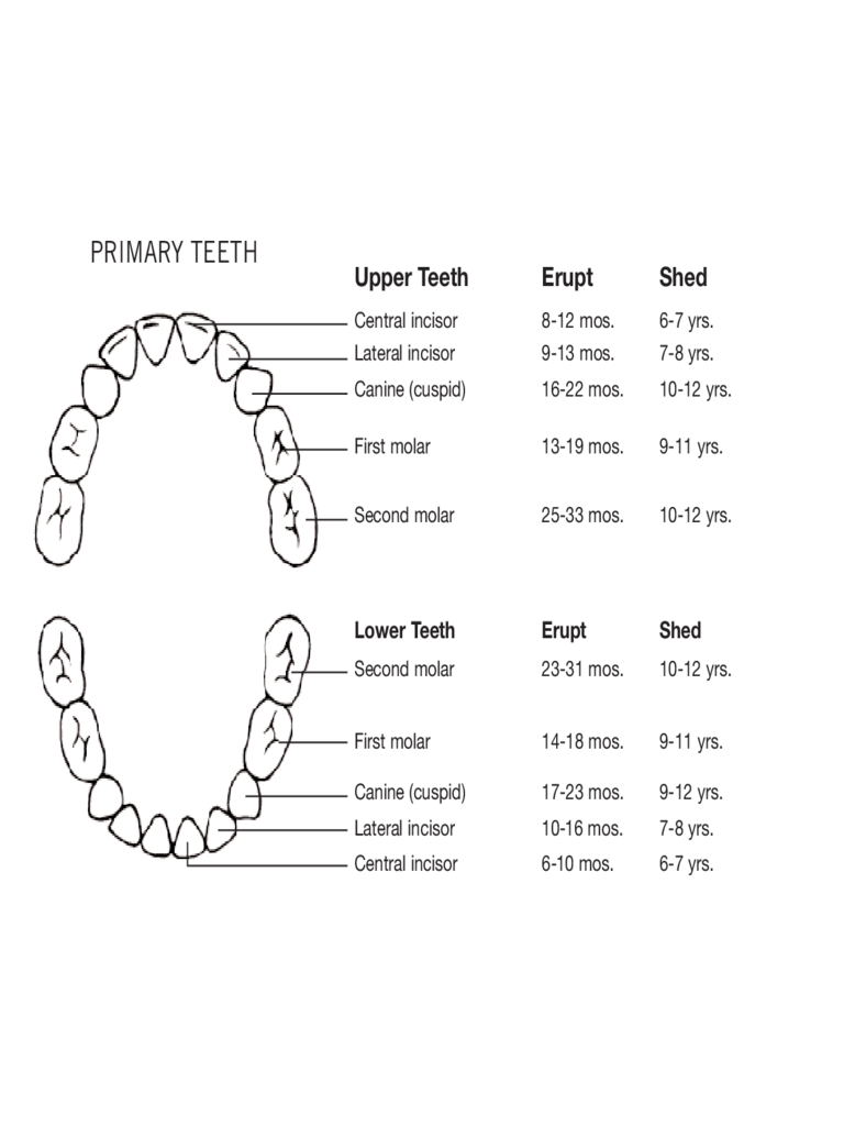 Primary Teeth Chart