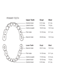 Primary Teeth Chart Free Download
